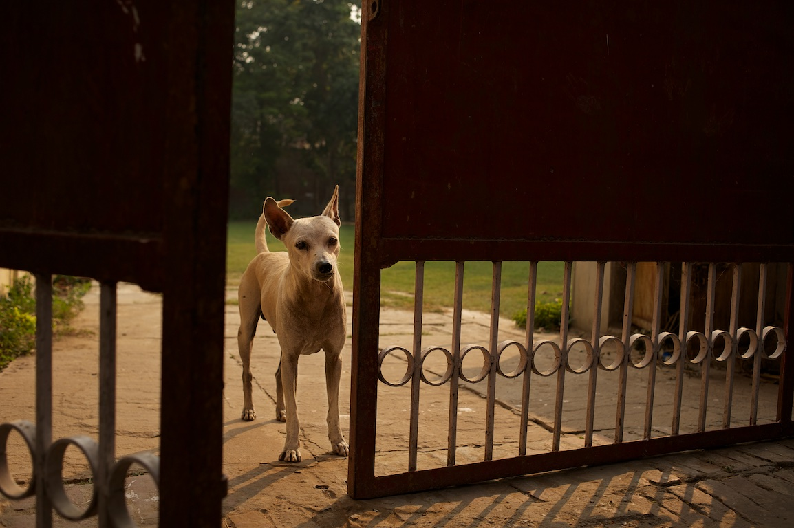 dog looks through gate in India