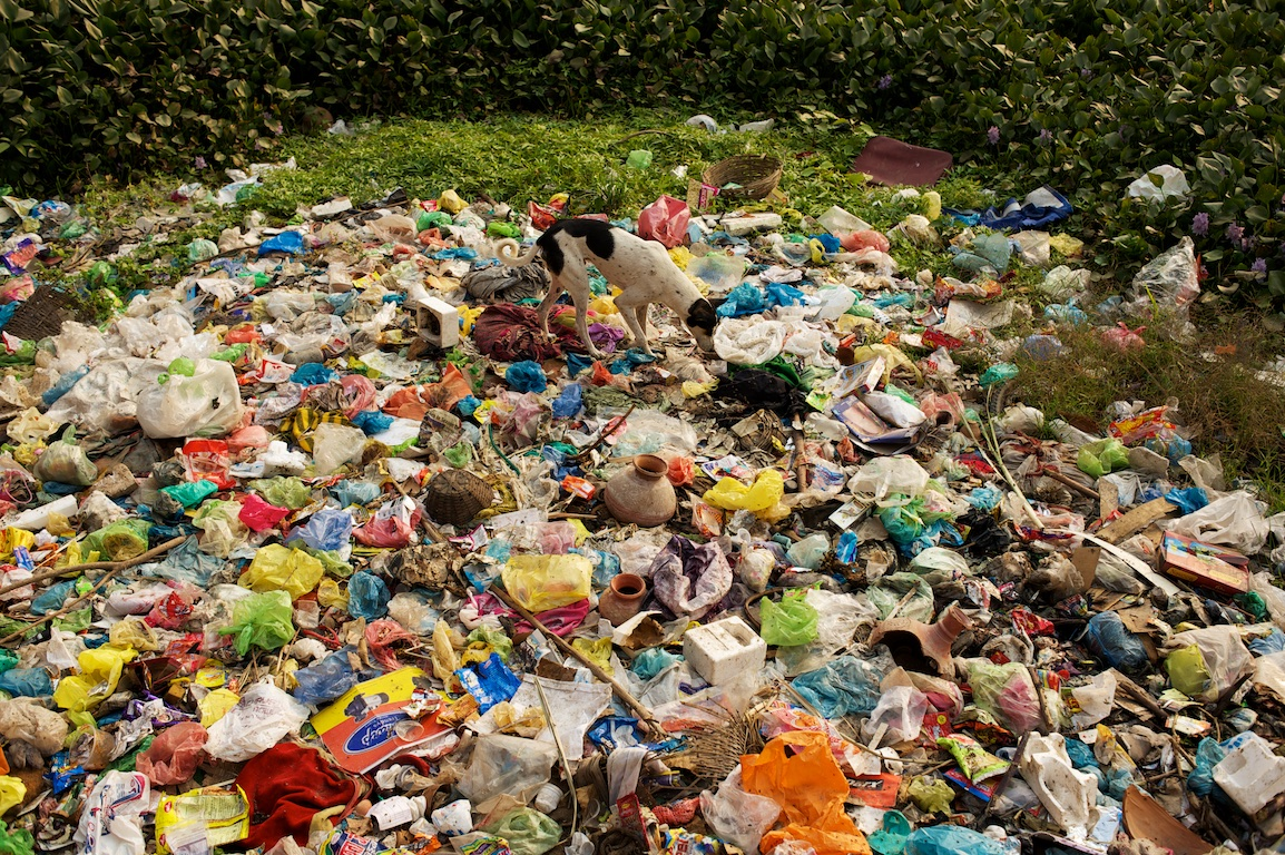 dog walks across rubbish in Varanasi in India