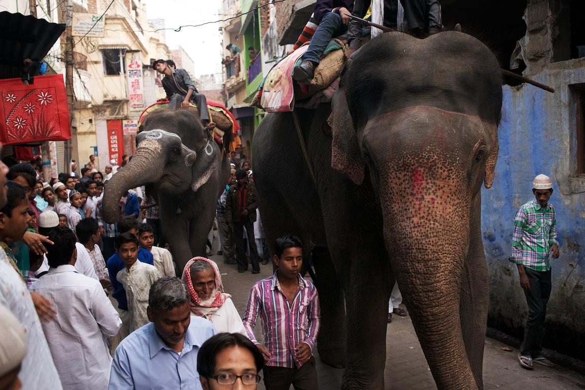 Elephants walk down street in Varanasi