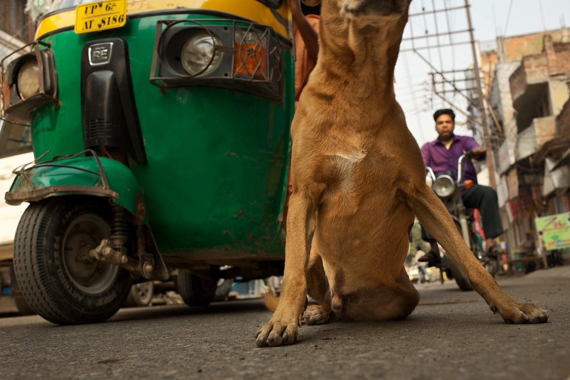 Photograph of took took and dog on the streets of Varanasi