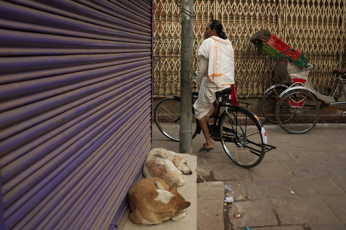cyclist and dogs in India