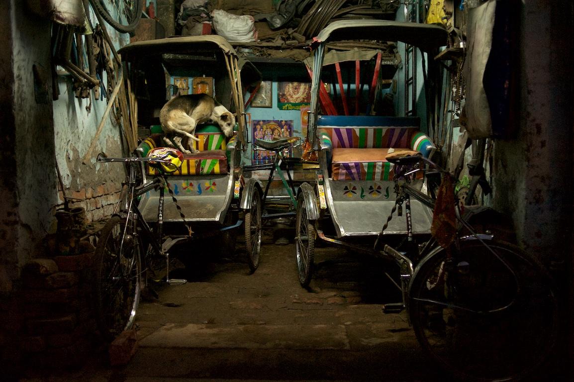Dog curls up in rickshaw seat at night