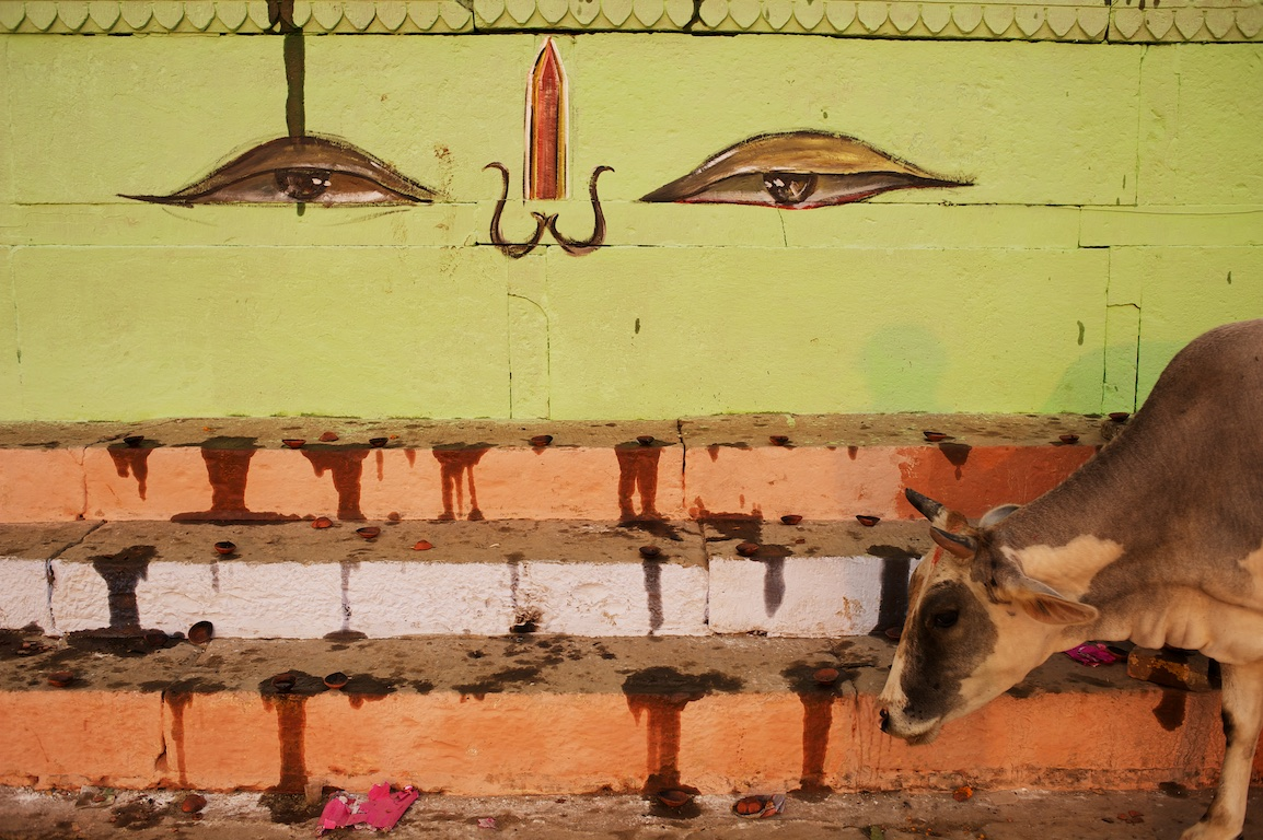 wall paintings and cow in varanasi