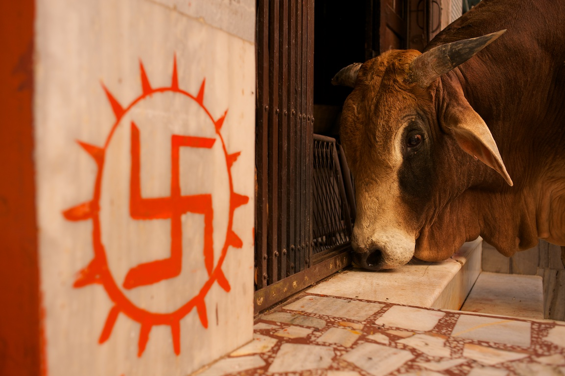 photograph of cow and hindu symbol