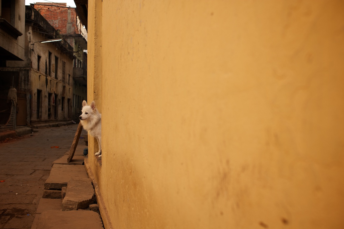 photograph of dog looking out from house doorway in varinasi