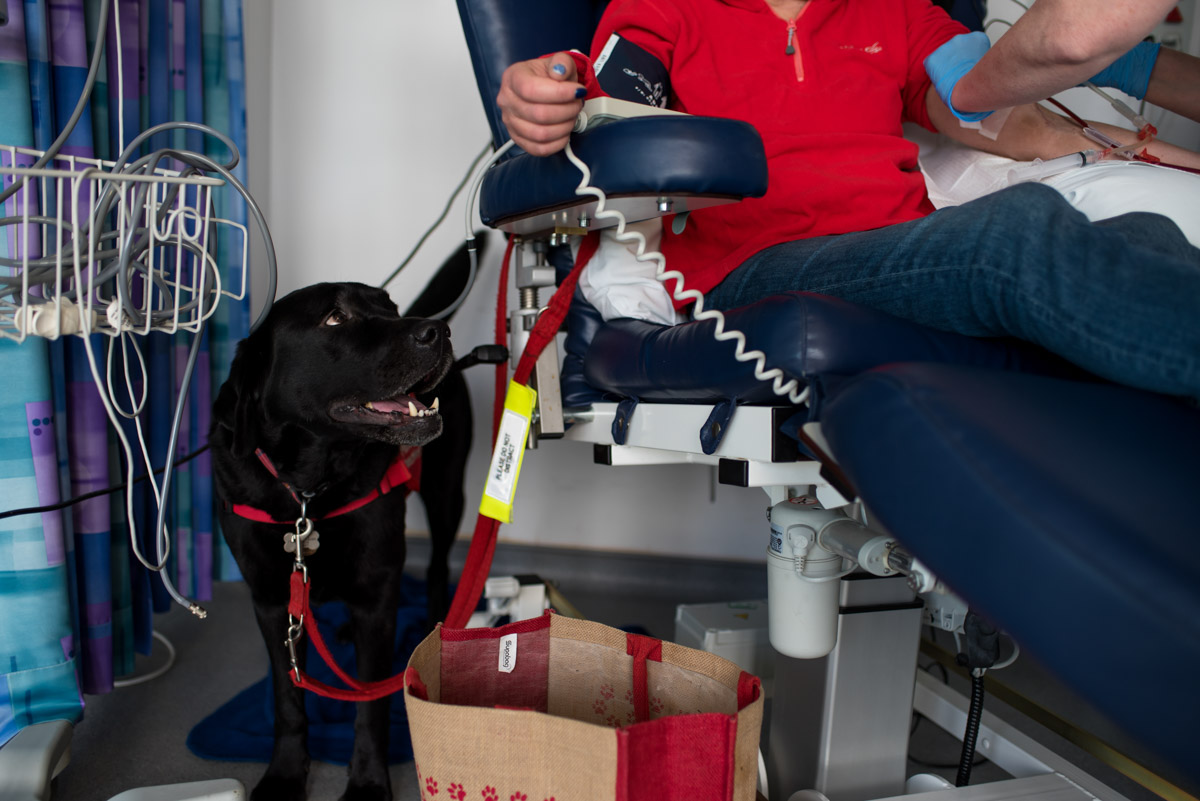 Photograph of Claires dog while having dialysis