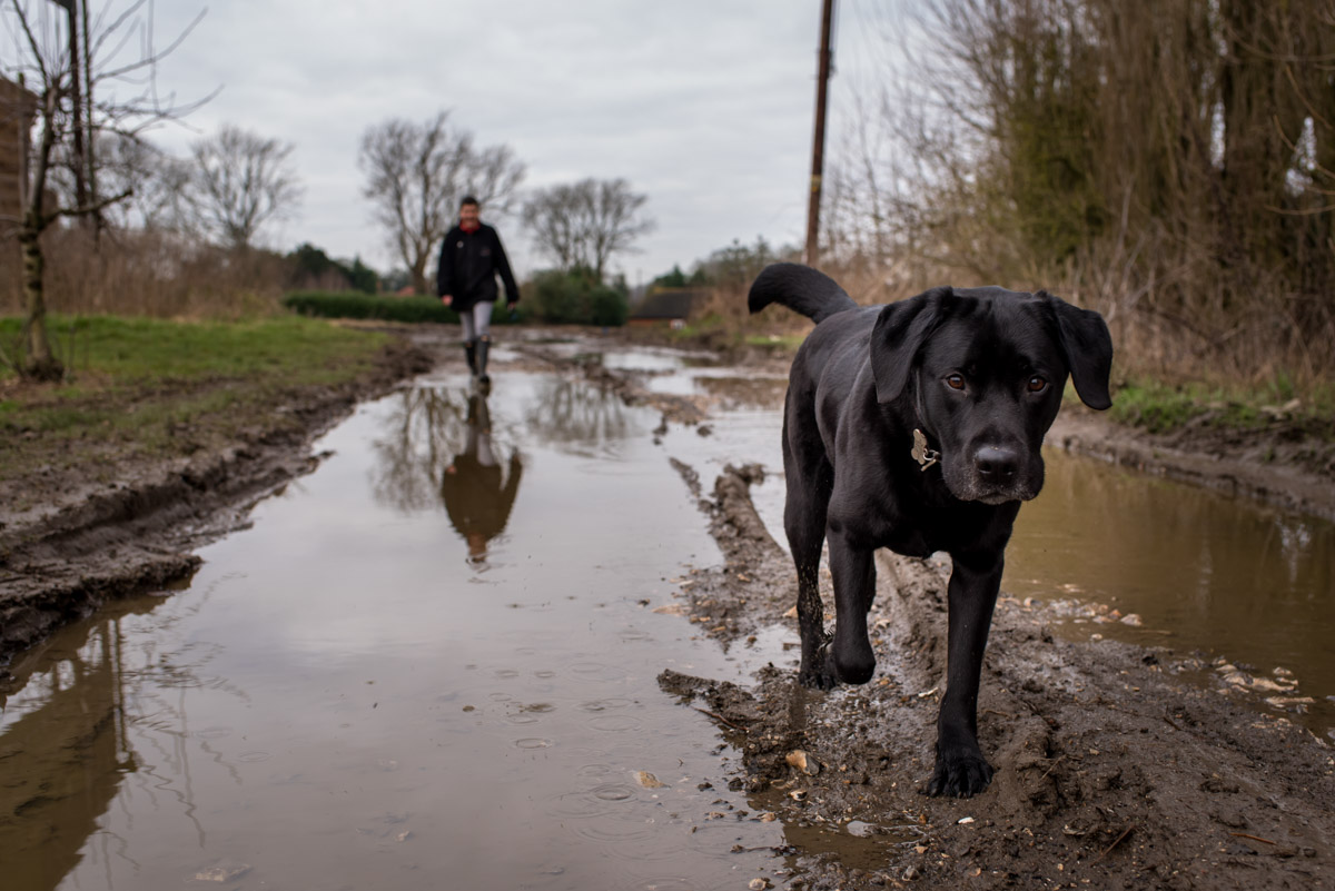 Photograph of dog and Claire in kent