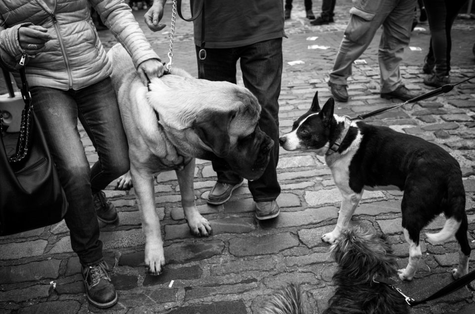 Documentary Photography – Dogs