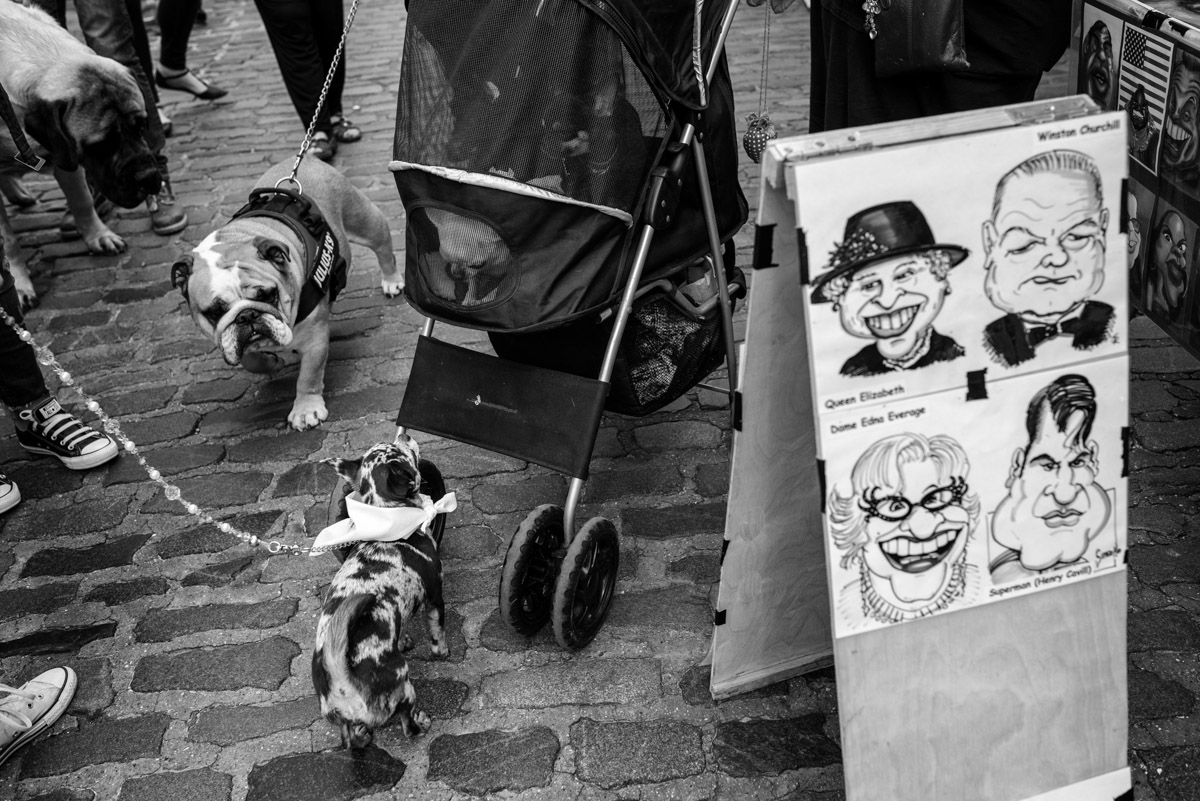 Black and white documentary photograph at faversham dog show in Kent