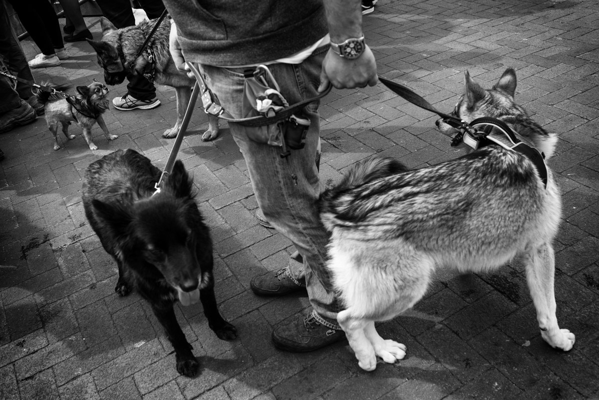 documentary photograph of dogs in faversham in kent