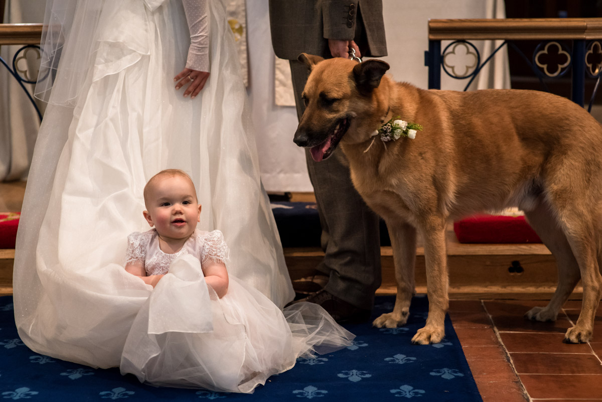 Photograph of dog and baby during Kent church wedding