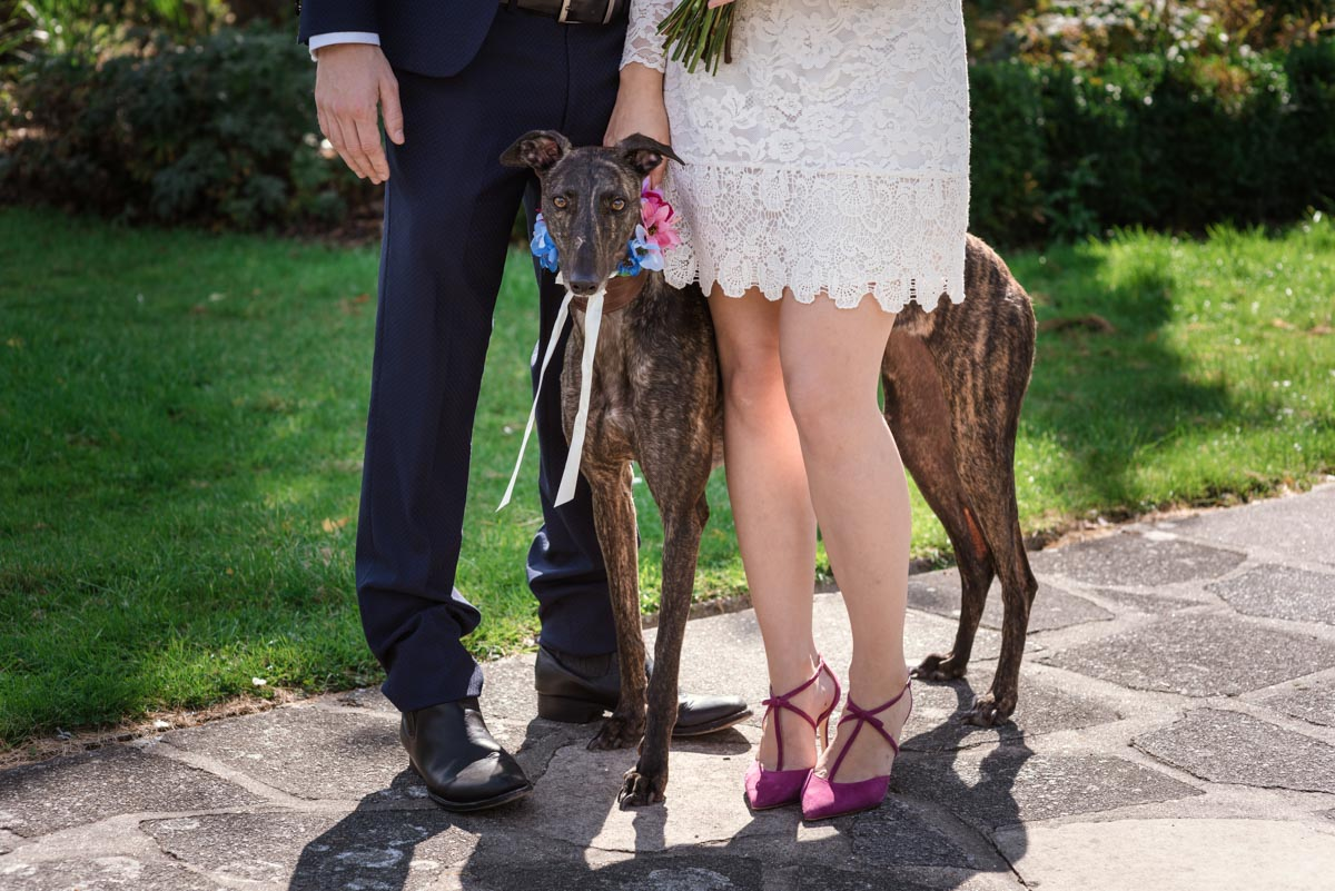 Photograph of Alex and james dog on their wedding day at danson house in kent