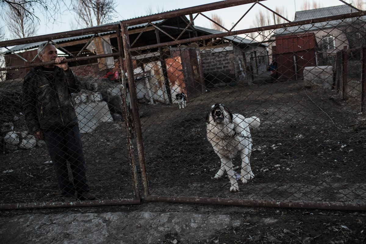 Photograph of barking pet dog in Gyumri, Armenia