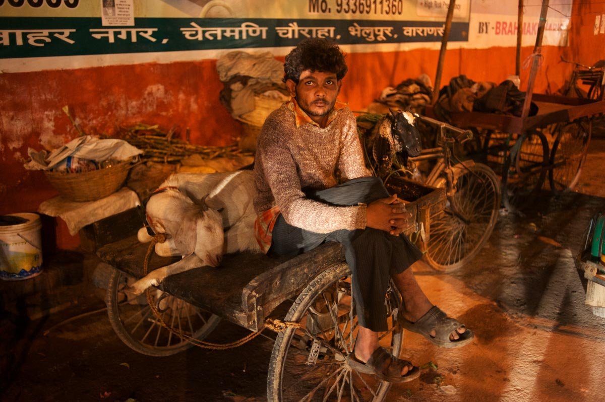 Man photographed sitting on his cart with his goats in Varanasi, India