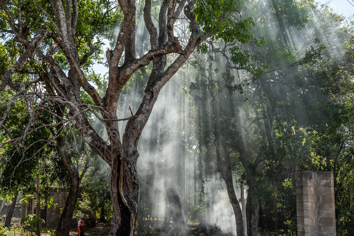 smoke and sunlight shining through trees in mexico
